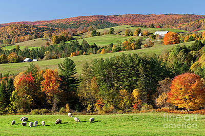 Photograph - New England Idyllic Autumn by Alan L Graham