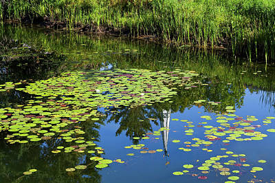 Photograph - New England Summer Pond by Alan L Graham
