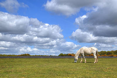 New Forest Pony Photograph - New Forest - Hampshire - Uk by Joana Kruse