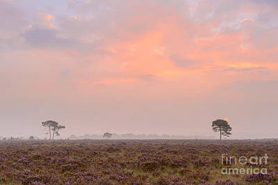 New Forest Morning Art Print by Richard Thomas