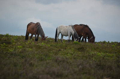 Photograph - New Forest Ponies England by Sherri Strikwerda