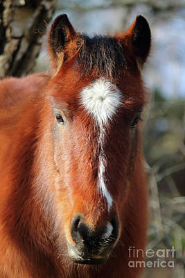 Photograph - New Forest Pony Hampshire Uk by Julia Gavin
