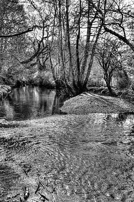 Photograph - New Forest Ripple by Hazy Apple