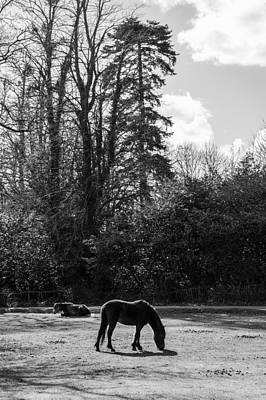 New Forest Silhouette Art Print by Hazy Apple