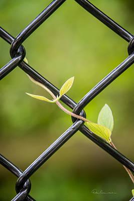 Photograph - New Green 2569 by Dan Beauvais