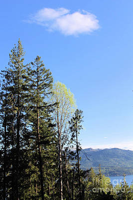 Photograph - New Green by Victor K
