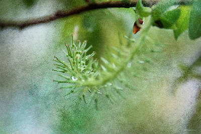 Photograph - New Growth 15 by WB Johnston