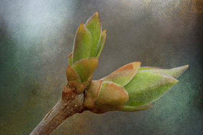 Photograph - New Growth 17-1 by WB Johnston