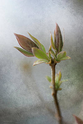 Photograph - New Growth 2 by WB Johnston