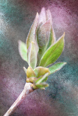 Photograph - New Growth 3 by WB Johnston