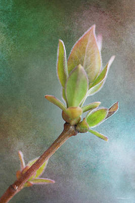 Photograph - New Growth 7 by WB Johnston