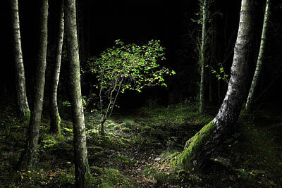 Photograph - New Growth - Birch Sapling by Dirk Ercken