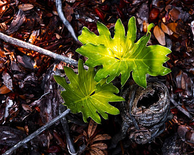 Photograph - New Growth by Christopher Holmes