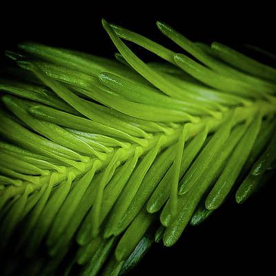 Photograph - New Growth by David Patterson
