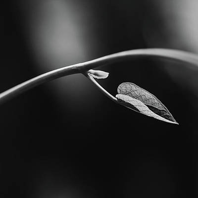 Photograph - New Growth by Laura Roberts