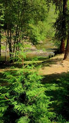 Photograph - New Growth North Yamhill River by Jerry Sodorff