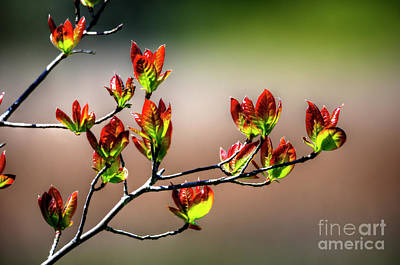 Photograph - New Growth by Paul Mashburn