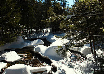 Photograph - New Hampshire Brook by Mim White