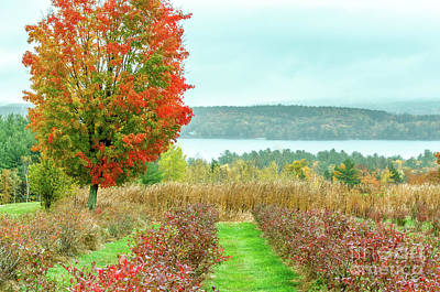 Photograph - New Hampshire Folliage  by Mike Ste Marie