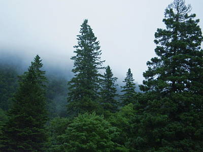 Photograph - New Hampshire Forest by Utopia Concepts