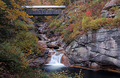 Photograph - New Hampshire Sentinel Pine Bridge by Juergen Roth
