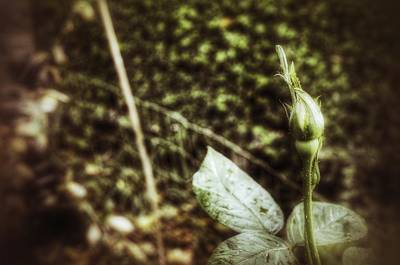 Photograph - New by Isabella F Abbie Shores