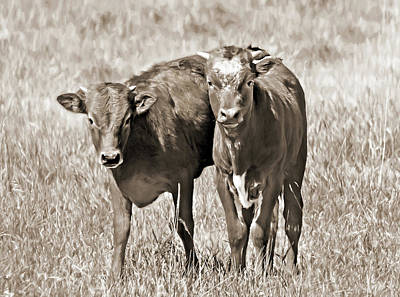 Photograph - New Kids On The Block Longhorn Sepia by Jennie Marie Schell