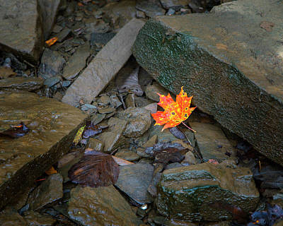 Photograph - New Leaf by Alan Raasch
