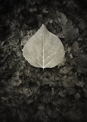 Sepia Photograph - New Leaf On The Old by Scott Norris