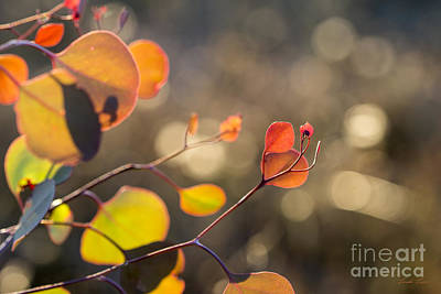 Photograph - New Leaves 2 by Linda Lees