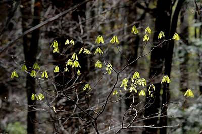 Wall Art - Photograph - New Leaves by Robert Papps