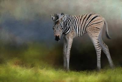 Photograph - New Life 2 Baby Zebra Wildlife Art By Jai Johnson by Jai Johnson