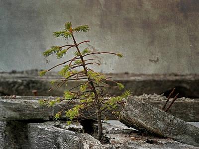 Photograph - New Life - 365-126 by Inge Riis McDonald