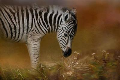 Photograph - New Life Baby Zebra Wildlife Art By Jai Johnson by Jai Johnson