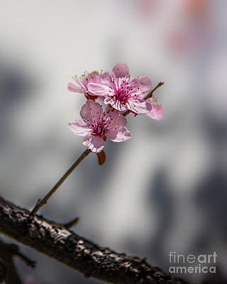 Photograph - New Life Blossoming  by Michael Arend