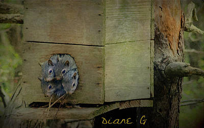 Photograph - New Life by Diane Giurco