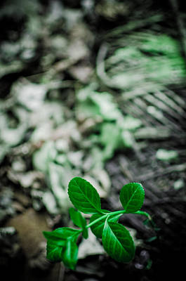 Photograph - New Life From Ruins  by Off The Beaten Path Photography - Andrew Alexander