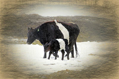 New Life In A Winter Snowfall Art Print by Donna Kennedy