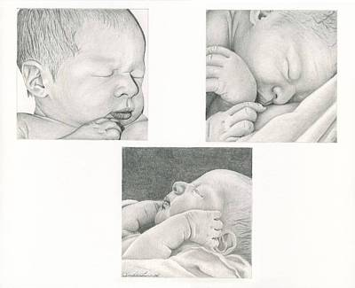 Drawing - New Life by Linda Bissett