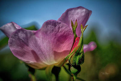 Photograph - New Life, New Beauty by Bill Posner