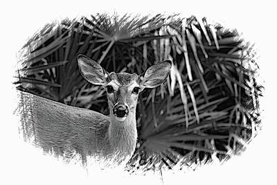 Photograph - New Man In The Woods by Sheri McLeroy