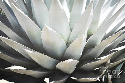 Photograph - New Mexico Agave Desert Nature Landscape by Andrea Hazel Ihlefeld