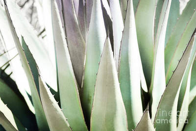 Photograph - New Mexico Agave Plant Landscape by Andrea Hazel Ihlefeld