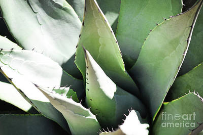 Photograph - New Mexico Agave Plant Nature by Andrea Hazel Ihlefeld