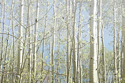 Photograph - New Mexico Aspen Trees Blue Sky Landscape by Andrea Hazel Ihlefeld