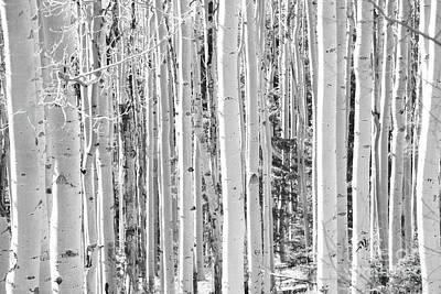 Photograph - New Mexico Black And White Aspen Tree Woodland Landscape by Andrea Hazel Ihlefeld