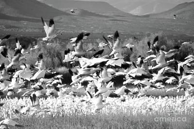 Photograph - New Mexico Bosque Del Apache Classic Bird Lake by Andrea Hazel Ihlefeld