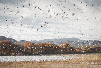Photograph - New Mexico Bosque Del Apache Snow Geese Mountain Landscape by Andrea Hazel Ihlefeld