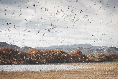 New Mexico Bosque Del Apache Snow Geese Mountain Landscape Art Print by Andrea Hazel Ihlefeld