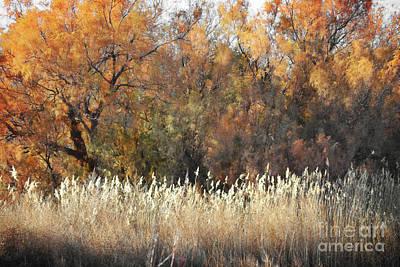 New Mexico Bosque Foliage Tree Landscape Art Print by Andrea Hazel Ihlefeld